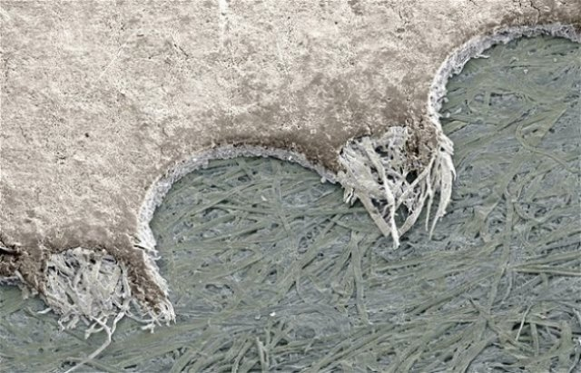 Lumea, sub lupa microscopului: Partea nevazuta a lucrurilor simple - Poza 11