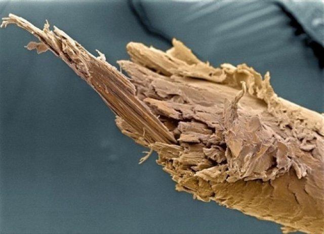 Lumea, sub lupa microscopului: Partea nevazuta a lucrurilor simple - Poza 8