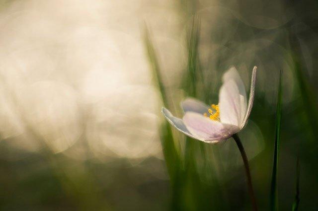 30 de poze cu flori minunate - Poza 19