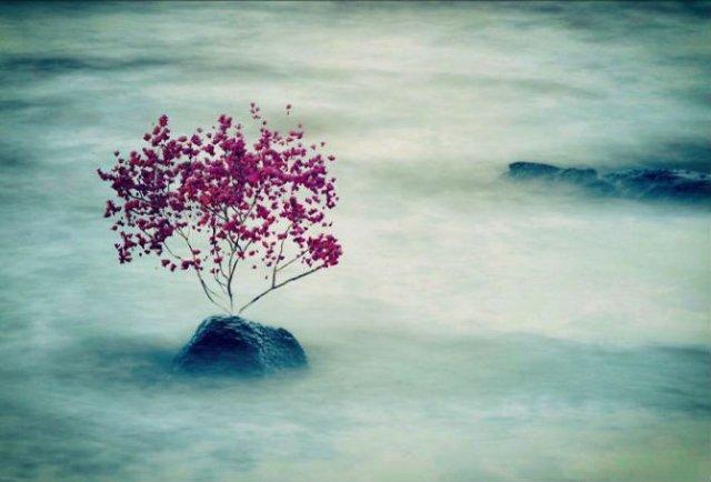 Arta fotografica, cu ajutorul unui iPhone