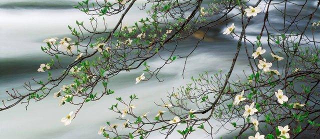 30 de poze cu flori minunate - Poza 21