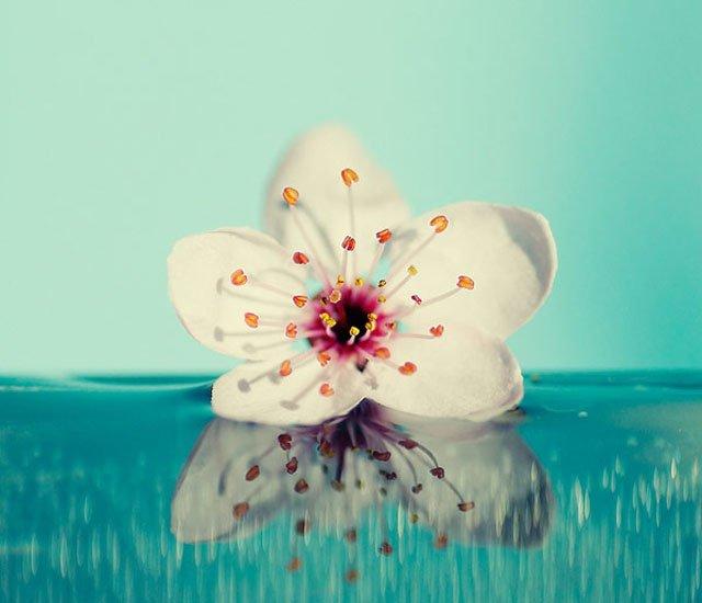 30 de poze cu flori minunate - Poza 22