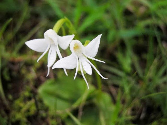 Expresivitatea splendida a florilor in 14 fotografii superbe - Poza 12