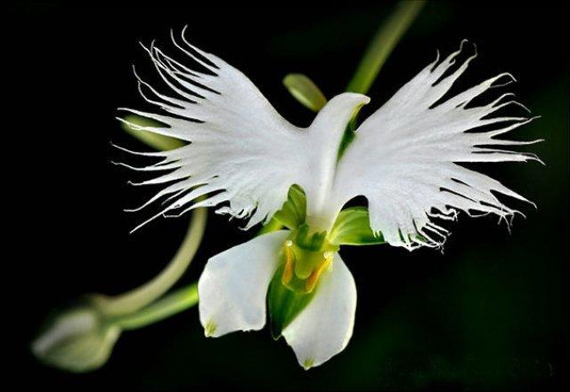 Expresivitatea splendida a florilor in 14 fotografii superbe - Poza 13