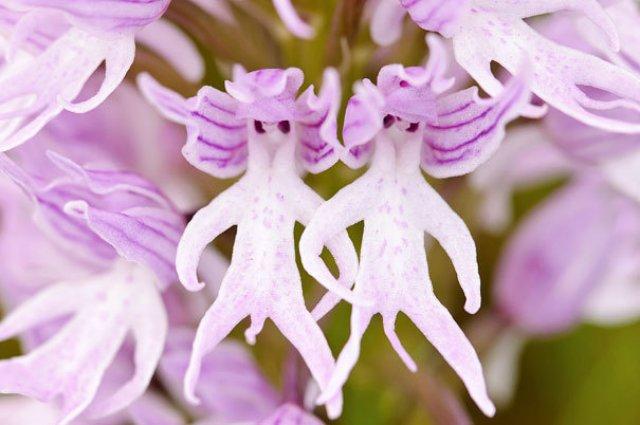 Expresivitatea splendida a florilor in 14 fotografii superbe - Poza 2