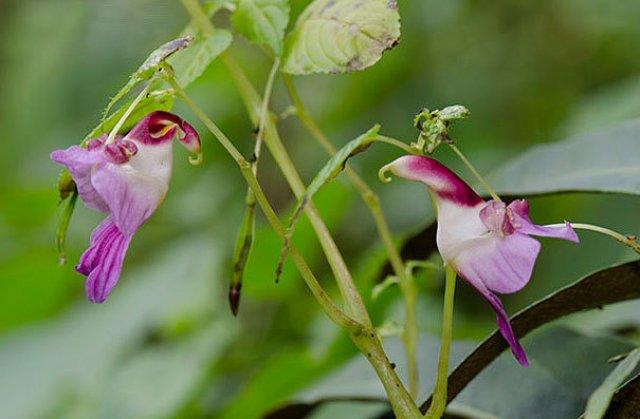 Expresivitatea splendida a florilor in 14 fotografii superbe - Poza 8