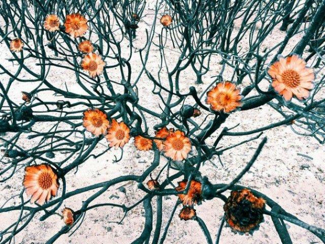Cele mai frumoase poze, din 2015, facute cu un iPhone - Poza 10