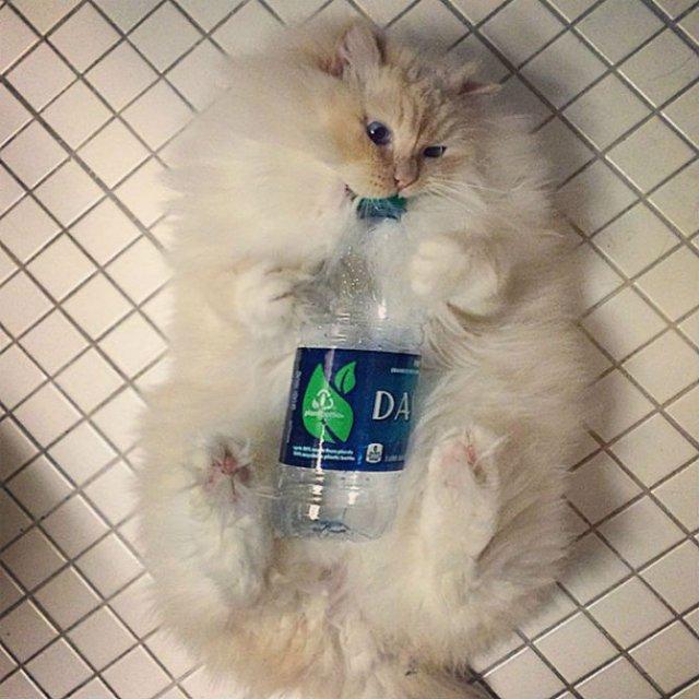 Cea mai pufoasa pisica din lume - Poza 2