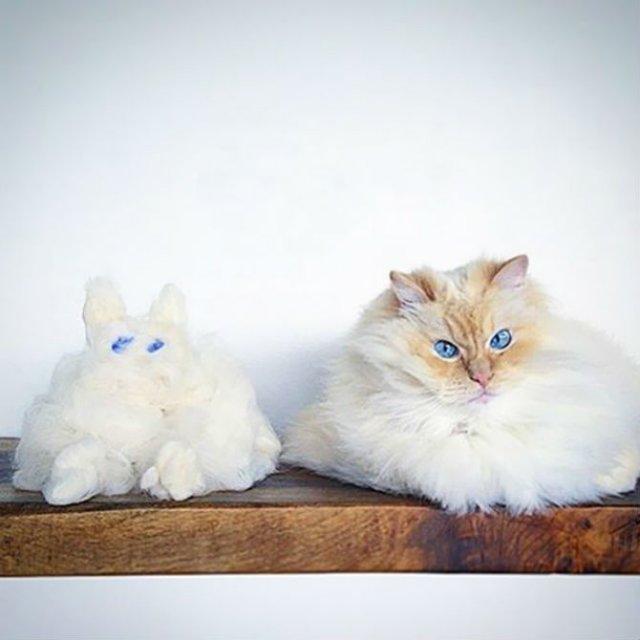 Cea mai pufoasa pisica din lume - Poza 3