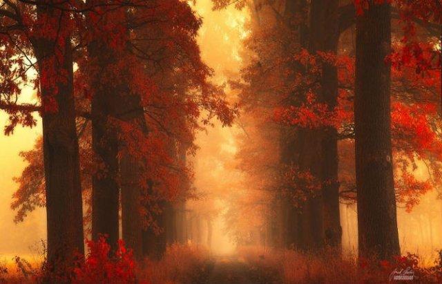Un vis de toamna, printre copaci - Poza 16