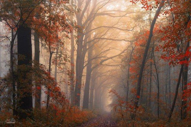 Un vis de toamna, printre copaci - Poza 17