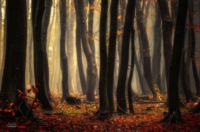 Un vis de toamna, printre copaci - Poza 18