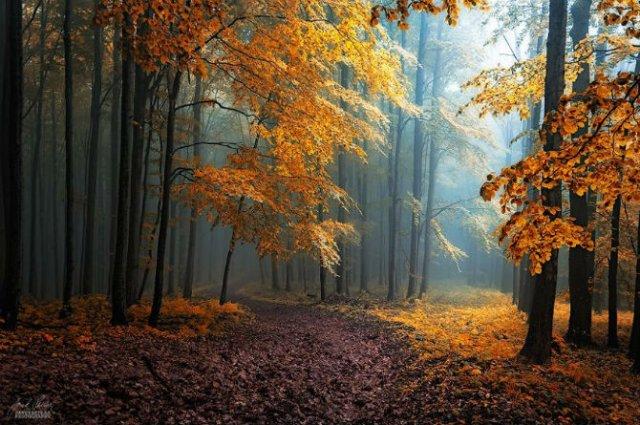 Un vis de toamna, printre copaci - Poza 19