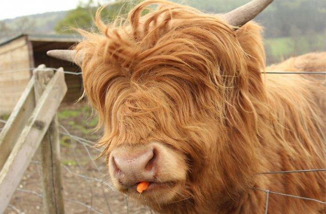 Cele mai paroase animale din lume - Poza 3