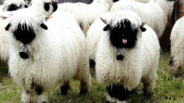 Cele mai paroase animale din lume - Poza 5