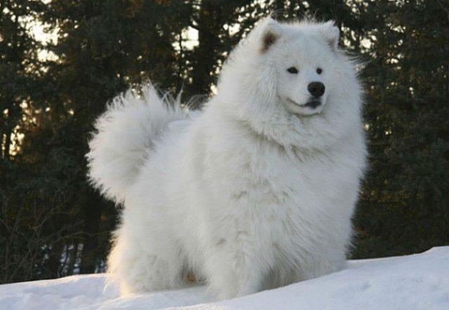 Cele mai paroase animale din lume - Poza 6