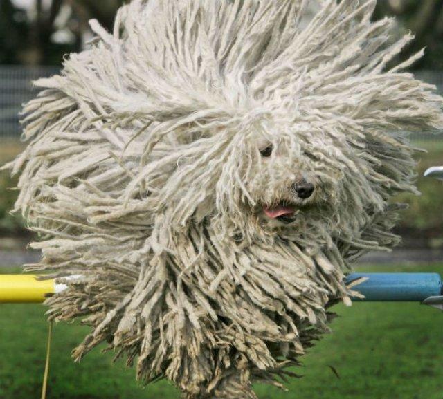 Cele mai paroase animale din lume - Poza 8