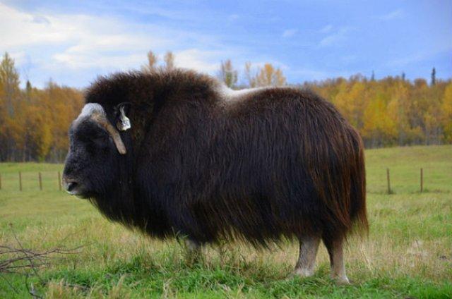 Cele mai paroase animale din lume - Poza 9