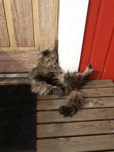 Protestele felinelor: 13 pisici incuiate pe afara, in crize - Poza 12