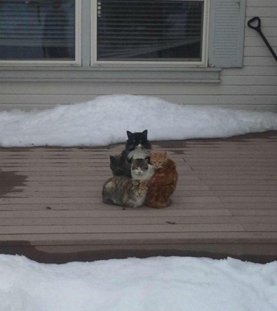 Protestele felinelor: 13 pisici incuiate pe afara, in crize - Poza 13