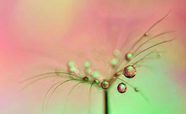 Grandoarea picaturilor de apa, in 11 fotografii macro - Poza 3