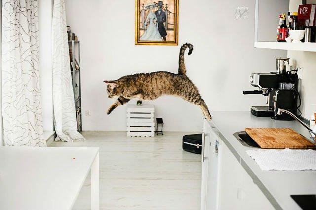 Cele mai frumoase pisici cu defecte fizice - Poza 7