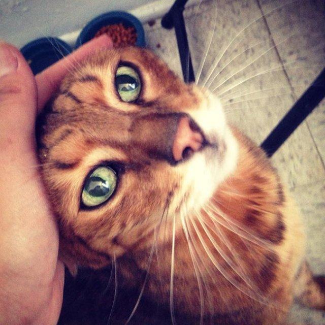 Cele mai batrane pisici adoptate de cei mai inimosi oameni - Poza 11