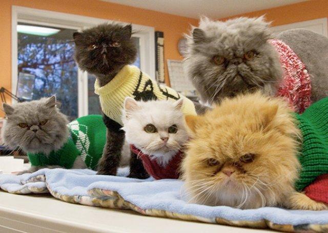 Cele mai batrane pisici adoptate de cei mai inimosi oameni - Poza 12
