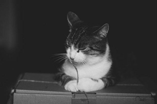 Pisici in alb si negru: Cel mai vibrant pictorial cenusiu cu feline - Poza 15