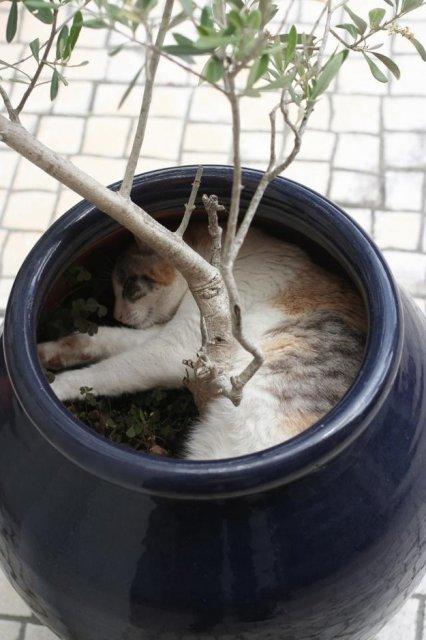 17 Pisici care dorm in cele mai haioase pozitii - Poza 16