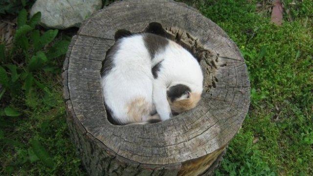 17 Pisici care dorm in cele mai haioase pozitii - Poza 17