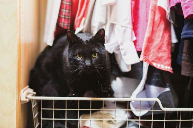Cele mai frumoase pisici cu defecte fizice - Poza 3