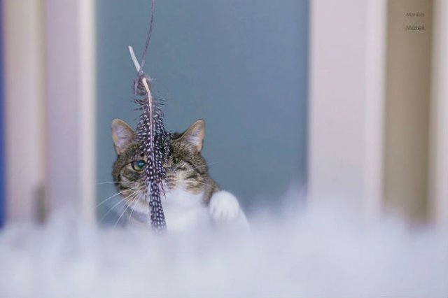 Cele mai frumoase pisici cu defecte fizice - Poza 5