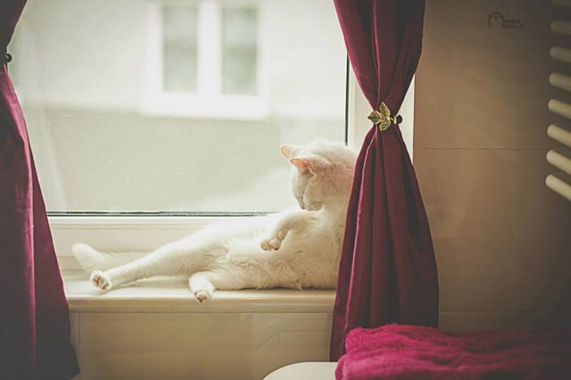 Cele mai frumoase pisici cu defecte fizice - Poza 6
