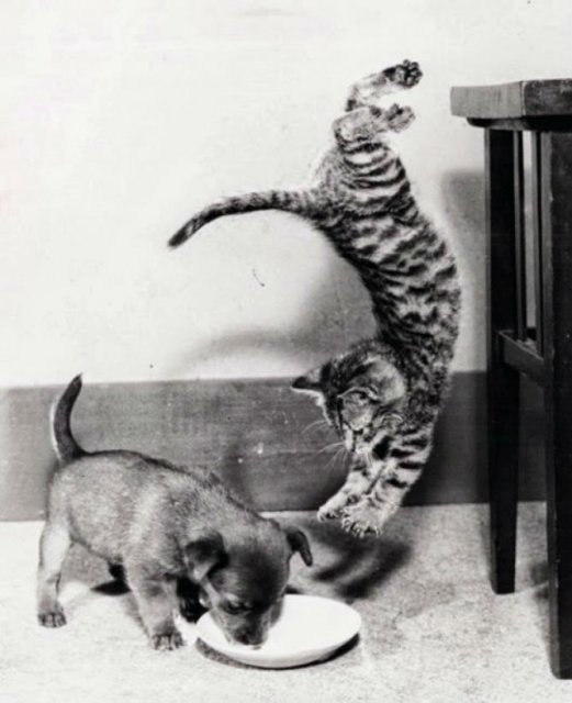 Ele pot face orice: Pisici zburatoare