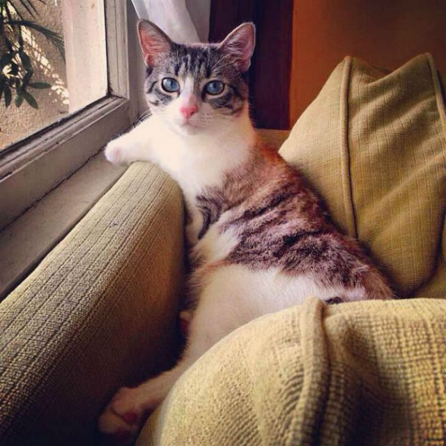 Impresionant! Pisica, fara doua picioare, pe care toti o iubesc - Poza 1