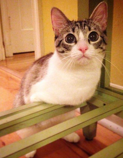 Impresionant! Pisica, fara doua picioare, pe care toti o iubesc - Poza 5