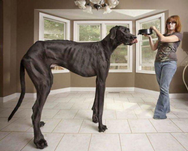 10 Poze cu animale care par ireale - Poza 10