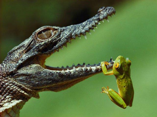 10 Poze cu animale care par ireale - Poza 4
