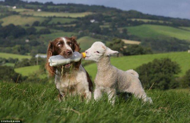 10 Poze cu animale care par ireale - Poza 5