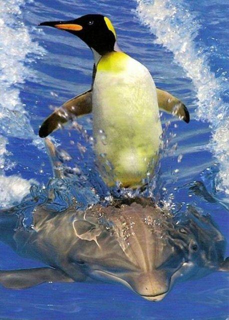 10 Poze cu animale care par ireale - Poza 8