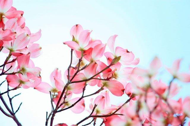 30 de poze cu flori minunate - Poza 24