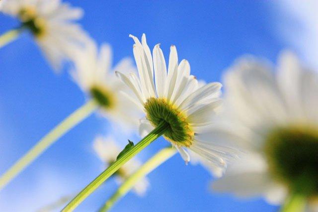 30 de poze cu flori minunate - Poza 23