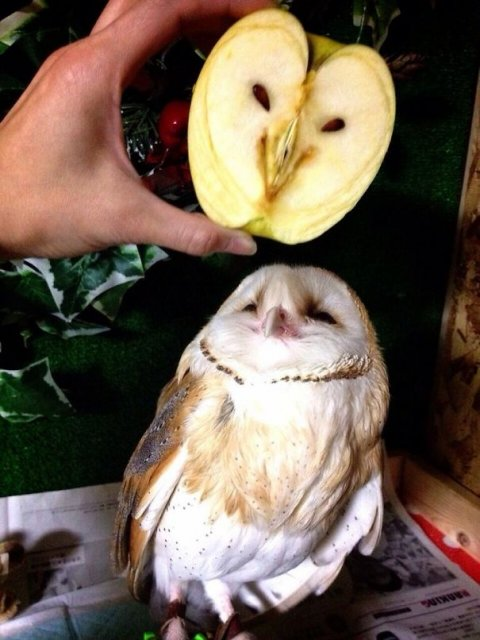 Fructe si legume cu infatisari hazlii - Poza 13