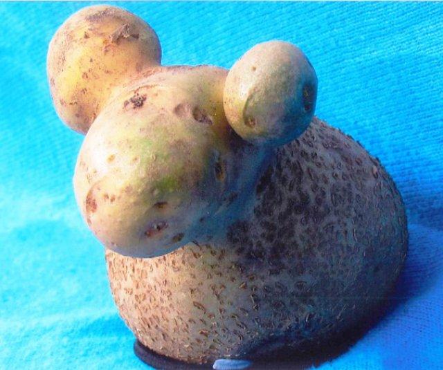 Fructe si legume cu infatisari hazlii - Poza 15