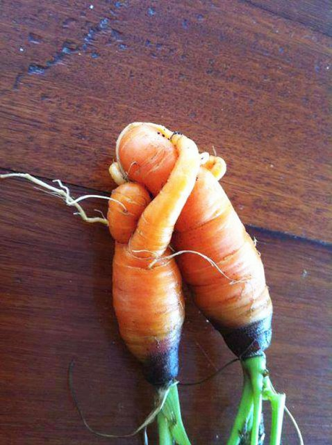 Fructe si legume cu infatisari hazlii - Poza 5