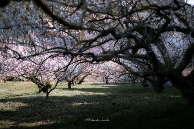 Primavara din Japonia, in cele mai frumoase poze - Poza 11