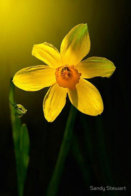 30 de poze cu flori minunate - Poza 26