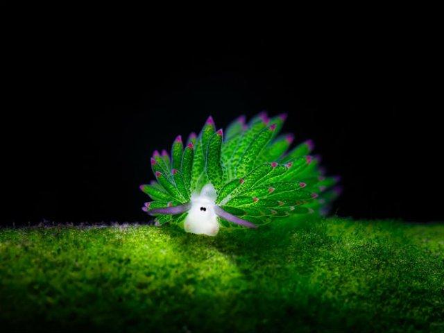 Oitele de mare, cele mai simpatice creaturi din mediul acvatic - Poza 1