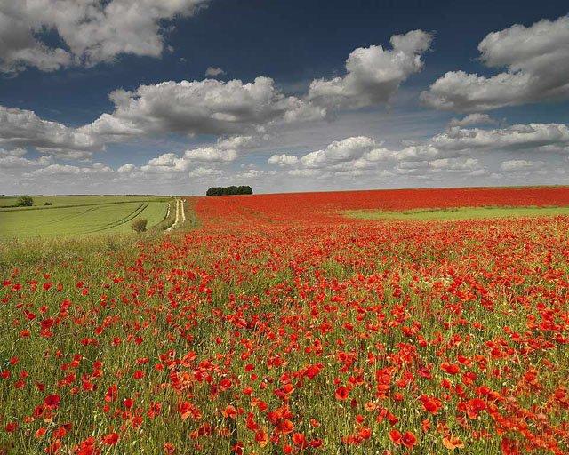30 de poze cu flori minunate - Poza 27